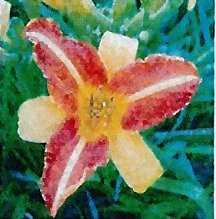 Daylily 'Frans Hals'
