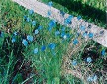 Flax, 'Appar'